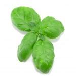 Léčivé bylinky, které pomáhají
