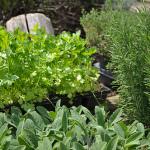 Jak fungují bylinky na hubnutí