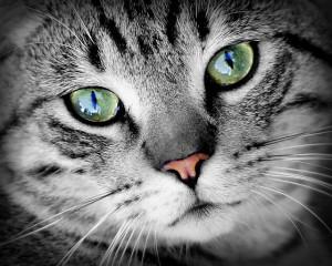 Má vaše kočka mlsný jazýček? Dopřejte jí to nejlepší! - Zdraví & Sport.cz |