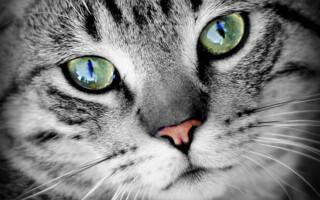 Má vaše kočka mlsný jazýček? Dopřejte jí to nejlepší!