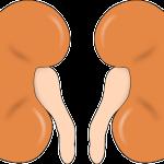 Bolest ledvin není radno podceňovat