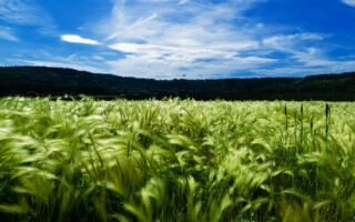 Zelené zdraví v tabletách