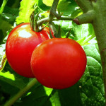 Zeleninové zázraky – 2. část